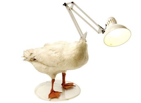 The Duck without a Head Lamp