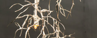 30 Gorgeous Twig Decorations for Your Home