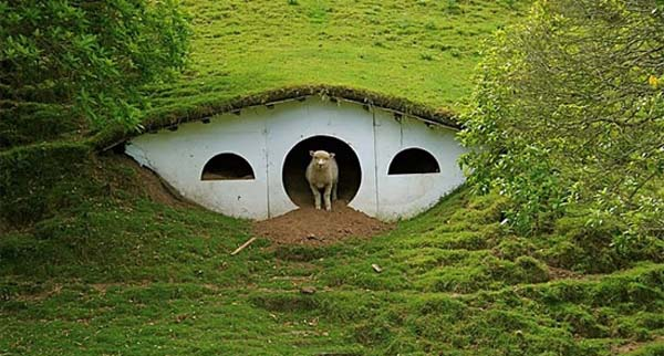 lotr sheep Cute Lord of the Rings Hobbit Houses in New Zealand