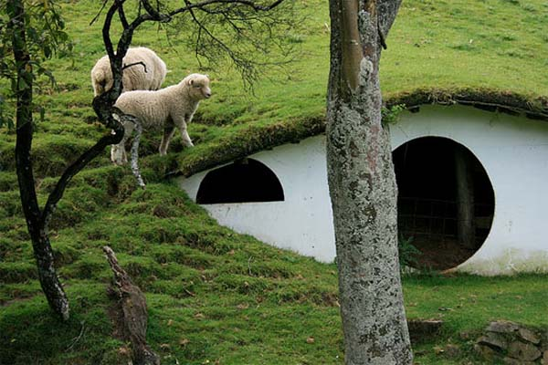 sheep village Cute Lord of the Rings Hobbit Houses in New Zealand