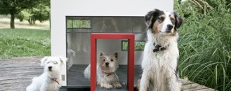 Modern Homes for Modern Pets: Adorable or Over the Top?
