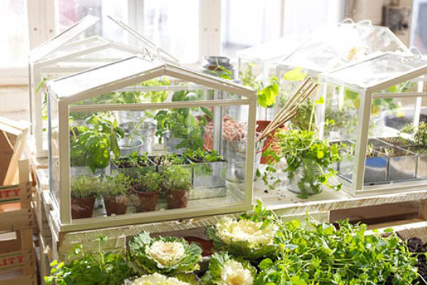 IKEA's Solution For Urban Gardeners : Mini SOCKER Greenhouses