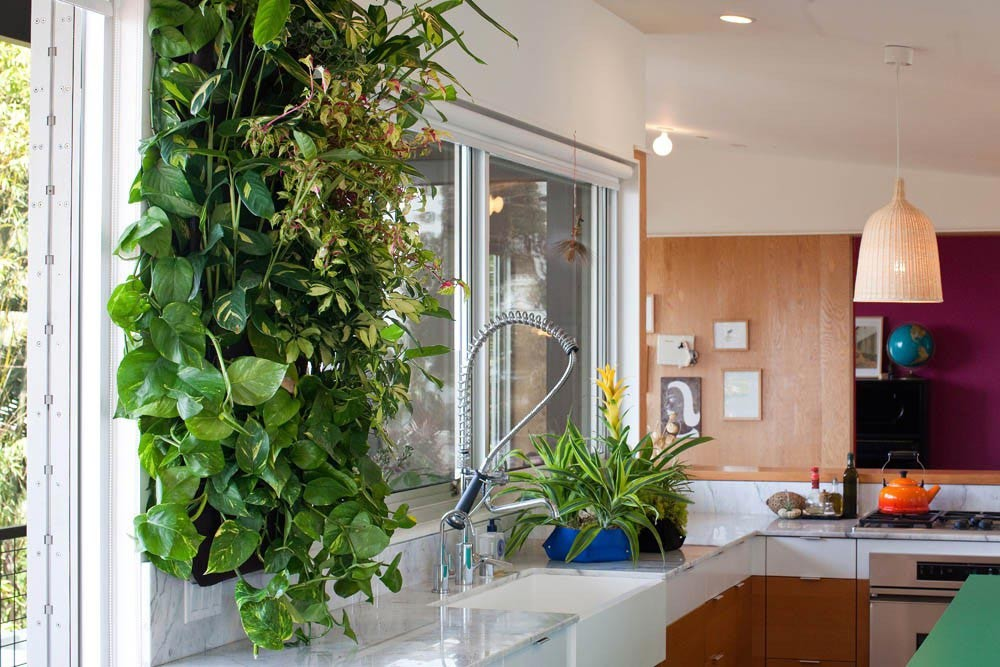 Living Walls How They Can Improve Your Home And Your Health