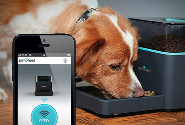 Pintofeed Lets You Feed Fluffy With Your Smartphone