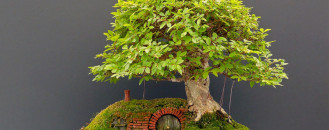 Reinterpretation of Tolkien's Fantastic Hobbit Home: Chris Guise's Bonsai Artwork