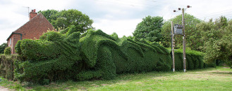 Ambitious 10 Year Gardening Project : John Brooker's Green Dragon Hedge
