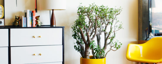 6 Gorgeous Modern Planters You Can DIY This Weekend