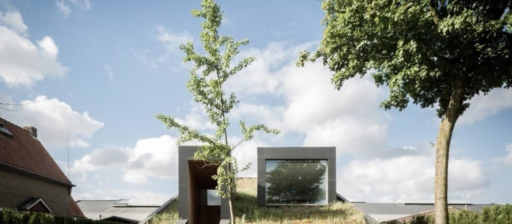 This Living Roof Literally Rises From the Lawn