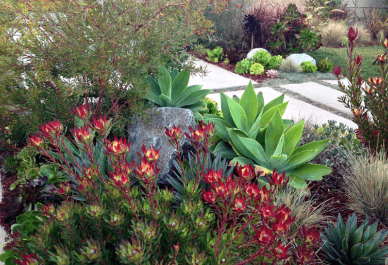 A Colorful Succulent Flowerbed