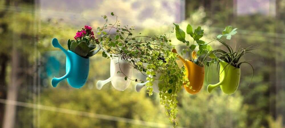 Livi Livens Up Potted Plants with Vertical Hanging Gardens