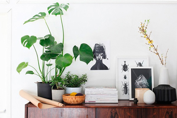 9 Air-Cleaning Plants Your Home Needs