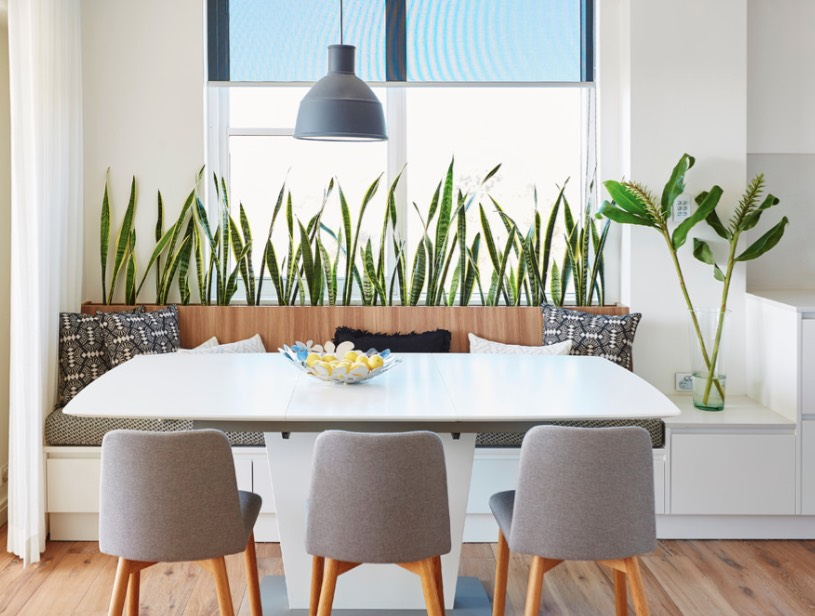 indoor house plant decor
