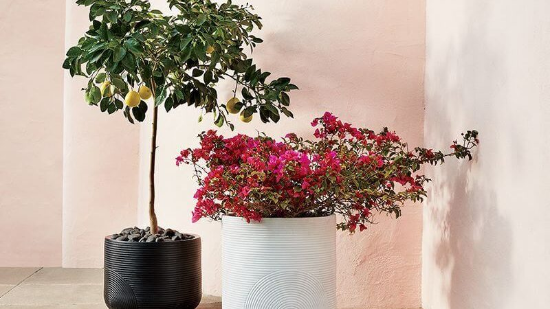 Beyond the Terra Cotta Pot: CB2's Modern Planter Line