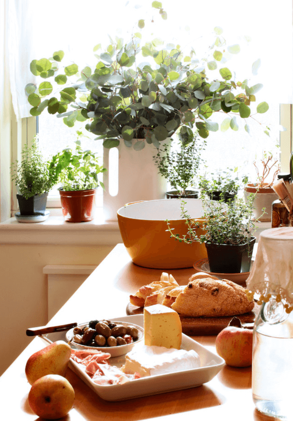 herbs to grow indoors - thyme