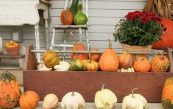 6 Ways to Get Amazing Pumpkin Menageries This Fall