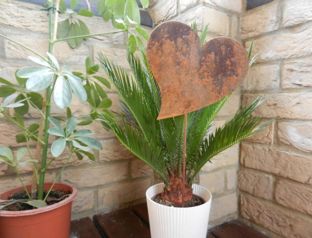 Decorate with Hearts Plant