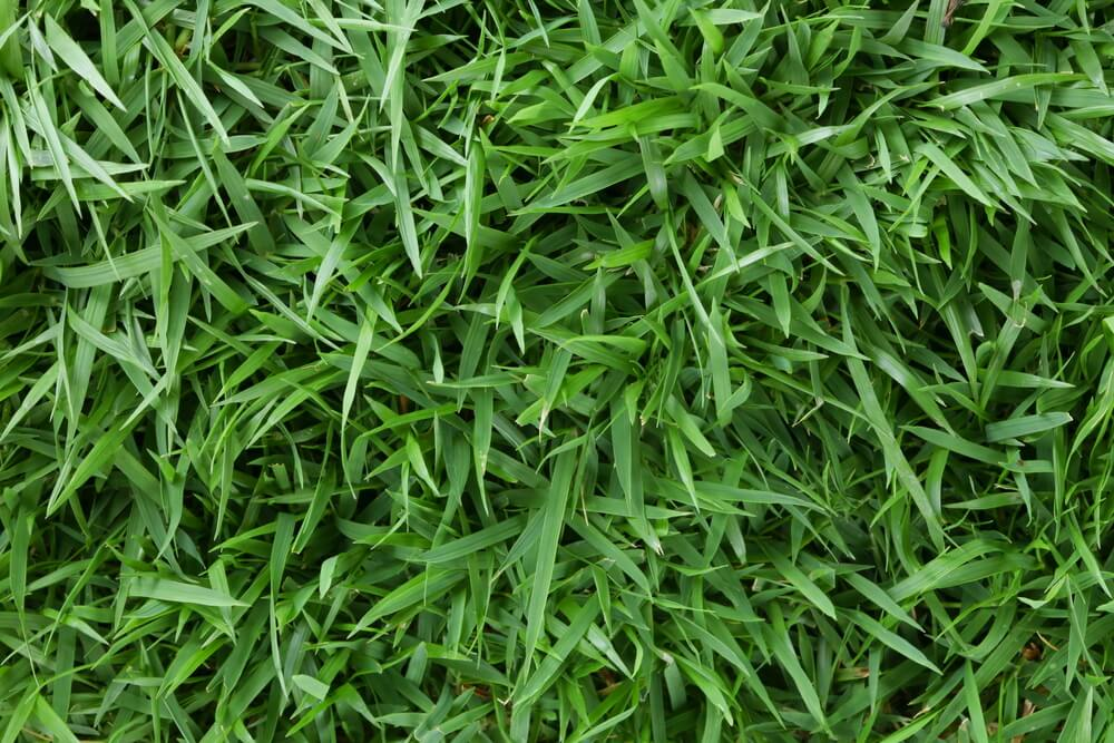Green Lawn Grass Shot