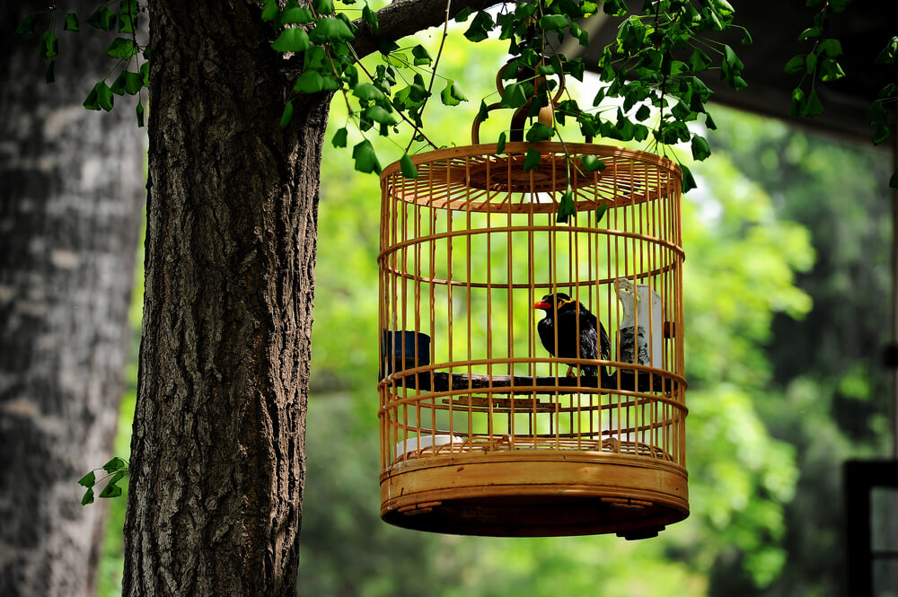 Interior Designs for Pet Lovers Bird Cage