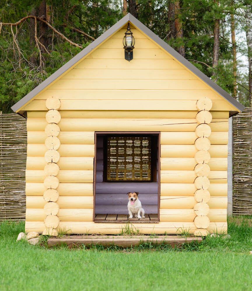 Interior Designs for Pet Lovers Yellow Dog House