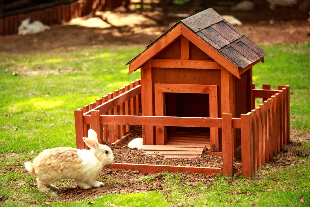 Interior Designs for Pet Lovers Rabbit Hutch