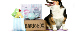 BarkBox: the Subscription Service that Treats Your Four-Legged Friends