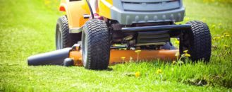 Should You Cut Your Grass Weekly?