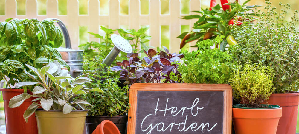 Your Summer Herb Garden Checklist