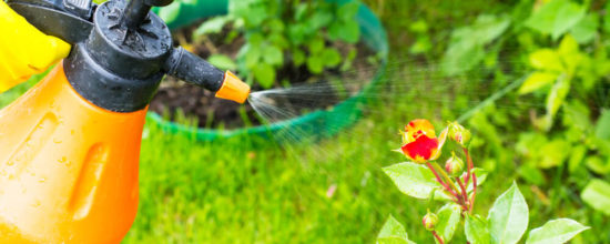 Organic Pest Control for the Garden