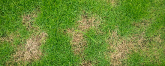 How to Patch a Spotty Lawn in No Time