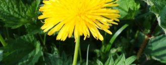 7 Common Weeds & How to Get Rid of Them