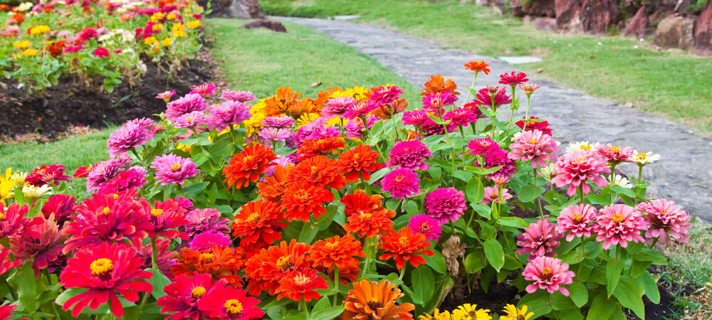 How to Pick a Garden Color Palette